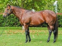 Vinery Stud: Top Quality Yearlings On Offer At Gold Coast